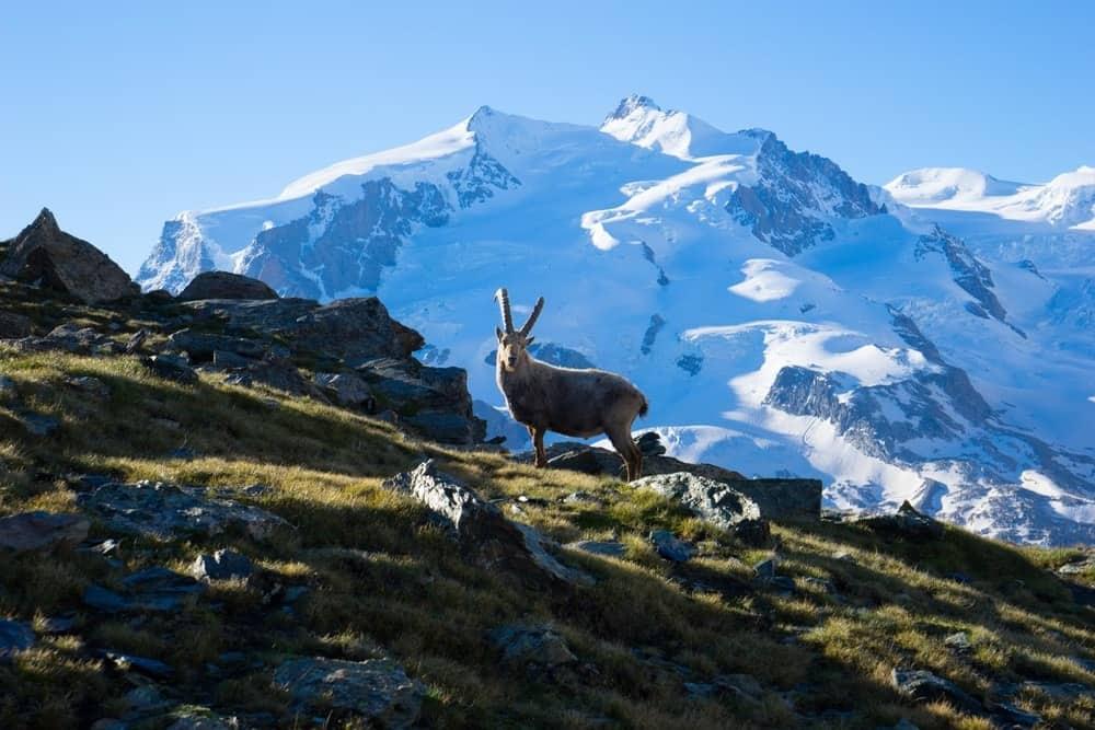 Zermatt 2014 (2)